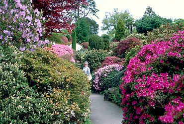 Leonardslee Gardens in southern England, one of the very best!!